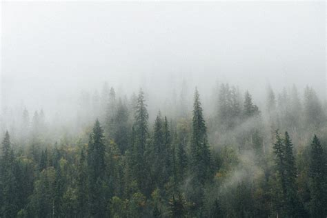 Foggy Evergreen Forest Wallpaper Florence Just Another Wordpress Site