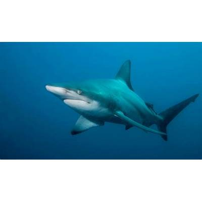 Sharks – Fear Beneath