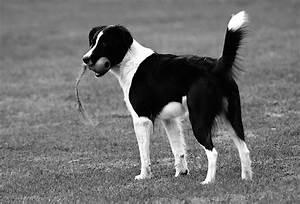 Schwarz Weiß Kontrast : schwarzweiss hund in schwarzweiss foto bild tiere haustiere hunde bilder auf fotocommunity ~ Frokenaadalensverden.com Haus und Dekorationen