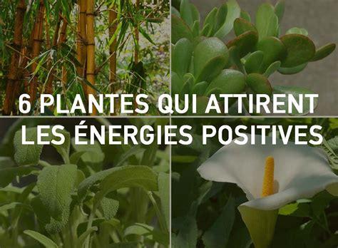quelle plante pour une chambre 6 plantes qui attirent les énergies positives selon le