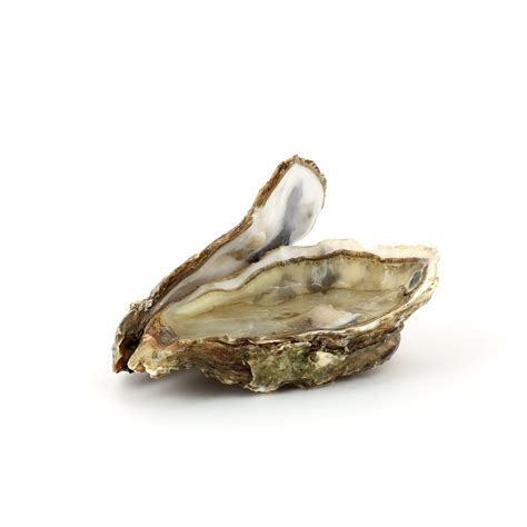 ecole de cuisine alain ducasse huître poissons et fruits de mer