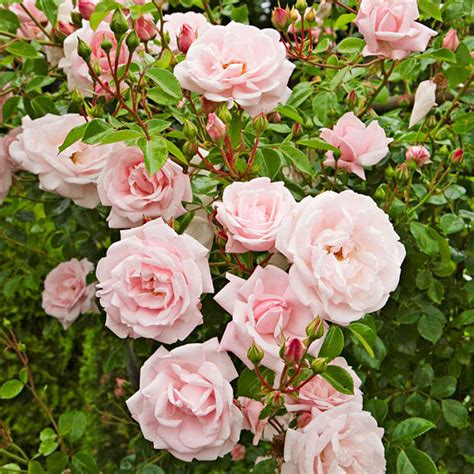 when to prune roses garden finance when you should prune what in your garden garden finance