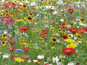 Graines Fleurs Des Champs : fleurs sauvages ~ Melissatoandfro.com Idées de Décoration