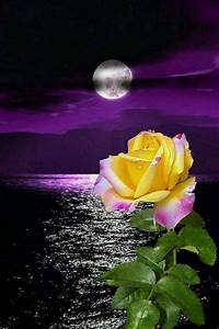 Good night to all ! - Bell Morin - Google+ | PURPLE ...