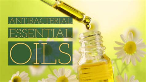 Gardenia Extract Benefits by Gardenia Essential Benefits Heavenly Aroma Herbs