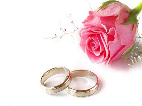 wedding design pink wedding pink rose  rings wallpaper