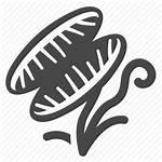 Plant Carnivorous Trap Svg Venus Flytrap Icon