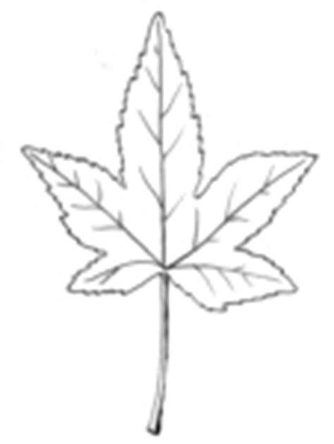 Dessins feuilles