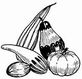 Gourds Coloring Clip sketch template