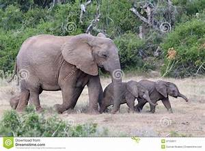 Baby African Elephants And Mom Royalty Free Stock ...
