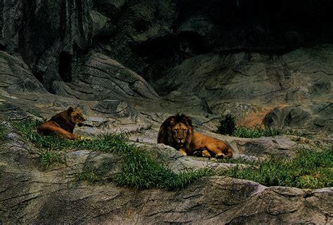 Les Zoos Dans Le Monde  Higashiyama Zoo & Botanical Gardens