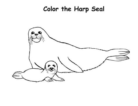 baby harp seal   mother coloring page coloring sky