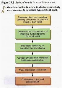 Human Body Flow Diagram Mania