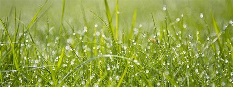 rasen kalken regen rasenm 228 hen bei regen rasen m 228 hen wenn der boden nass ist