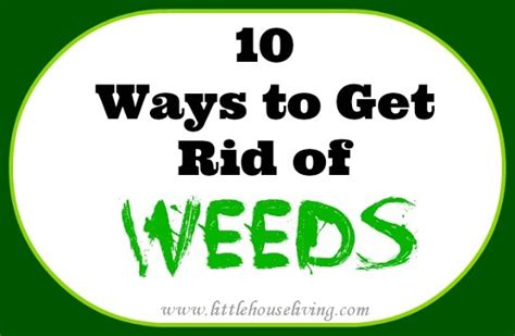 how to get rid of weeds organically 10 ways to get rid of weeds