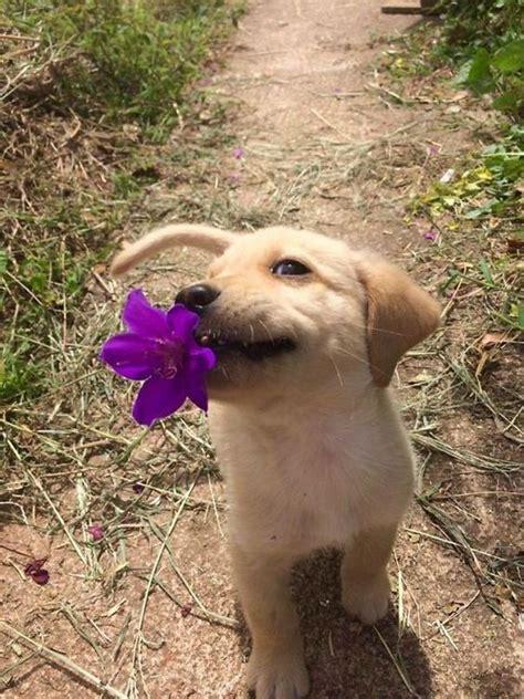 puppy  purple flower   mouth luvbat