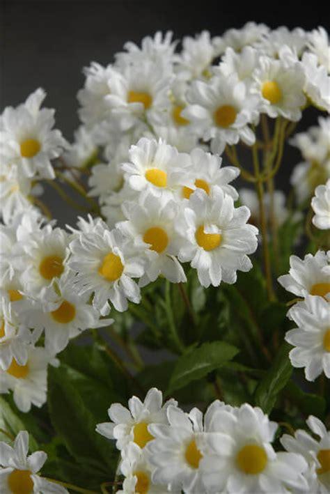 white daisy bouquet   stems