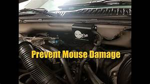 Prevent Mouse   Rodent Damage To Car Wiring  Mouse Blocker