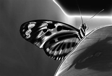 Butterfly Solarized Photograph By Ron White