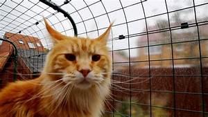 Construire Enclos Pour Chats : enclos pour chats omlet comment viter que vos chats se blessent se fassent voler ou pire ~ Melissatoandfro.com Idées de Décoration