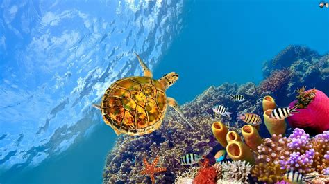 Aquatic Hd Wallpapers Most Beautiful Places In The World