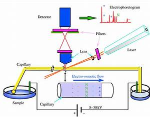 Diagram Of The Capillary Electrophoresis System With Laser