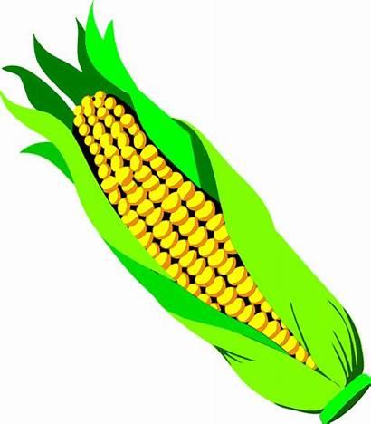 Corn Clipart Cob Svg Ear Clip Transparent