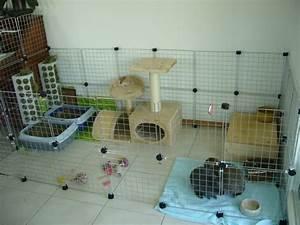 Maison Pour Lapin : les jouets de mes lapins maison de pinou pinterest ~ Premium-room.com Idées de Décoration