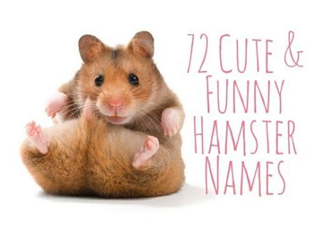 hamster names 72 cute and funny hamster names pethelpful