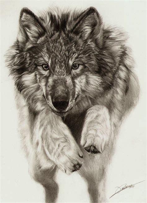 jumping wolf  ambr  deviantart traditional pencil
