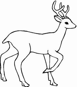 temperate rainforest coloring pages