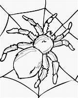 Coloring Pages Insect Insects Spider Gambar Bugs Laba Virus Bug Printable Sheets Sheet Realistic Drawings Colouring Animasi Mewarnai Beetle Serangga sketch template