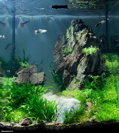 aquarium aquascaping results of the 1st stage of the scaper s tank contest 2014
