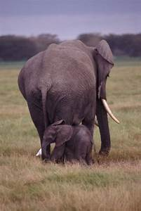File:Mother And Baby Elephant.jpg - Wikimedia Commons
