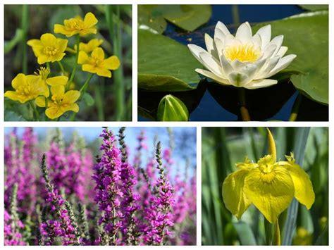 How To Design And Build A Wildlife Pond Saga
