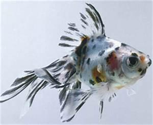 All About Aquarium Fish Factors Causing Fish to Lose Colors