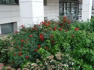 Arbustes Décoratifs à Fleurs : arbuste fruits d coratifs paris c t jardin ~ Premium-room.com Idées de Décoration
