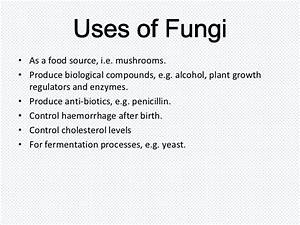 Viruses  Bacteria  Protists And Fungi