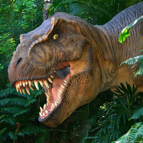 Animal Dinosaur Wallpaper - wallpapers dinosaur t rex park teeth wallpapers