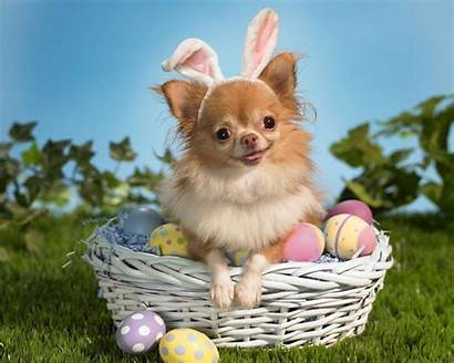 Puppy Adorable Basket Puppies Pup Pups Pet