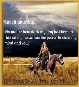 64 best Beautiful Horses images on Pinterest | Beautiful ...