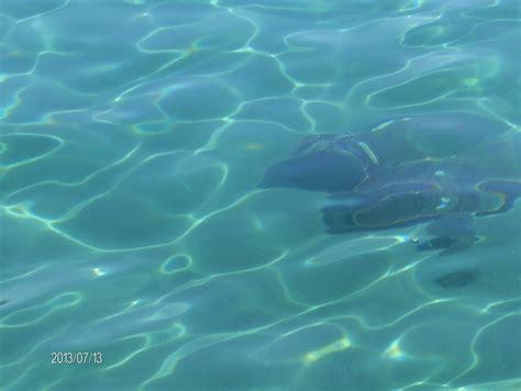 turisti per caso zante limni tartaruga caretta caretta viaggi vacanze e