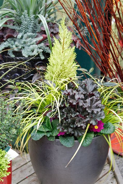 22 Best Fall & Winter Container Design Images On Pinterest