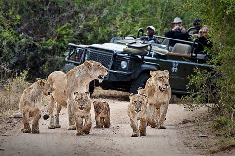 Experience A Big Cat Safari In South Africa