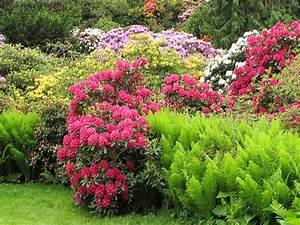 Garten Pflanzen : moorbeet nass oder trocken hauenstein rafz ~ Eleganceandgraceweddings.com Haus und Dekorationen