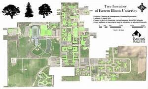 EIU Campus Trees