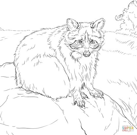 sitting raccoon coloring page  printable coloring pages