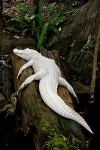 20 Animales Albinos Que Lucen Increibles