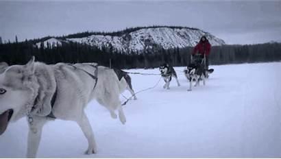 Husky Siberian Dogs Dog Related Names Snow