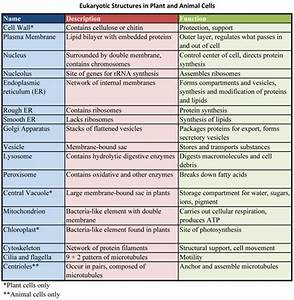 Functions Of Living Organisms